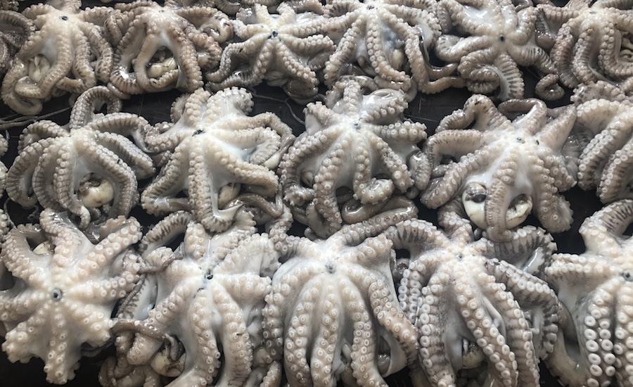 Tanzania Zanzibar rejser til zanzibar blæksprutter