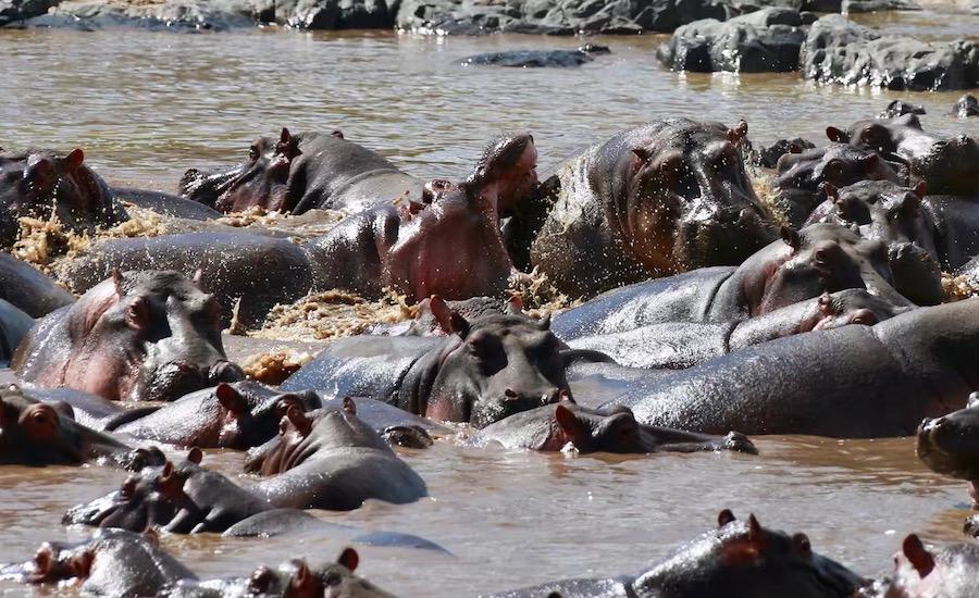 :Budgetsafari - Safari og afslapning på Zanzibar til en rigtig god pris