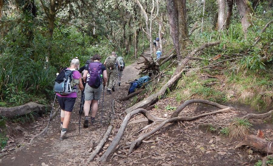 Tanzania Zanzibar safari rejse ngorongoro kilimanjaro rejse