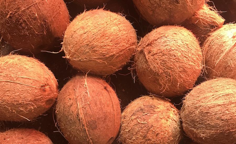 Tanzania Zanzibar udflugter på Zanzibar kokosnødder
