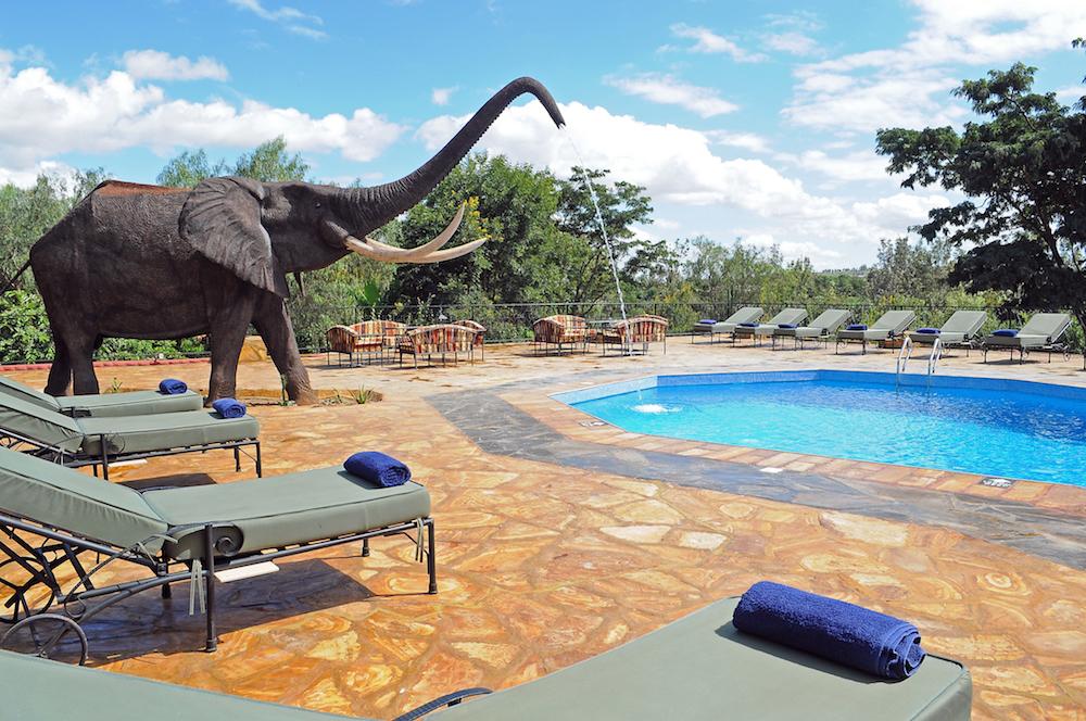 Safari - Kudu Lodge