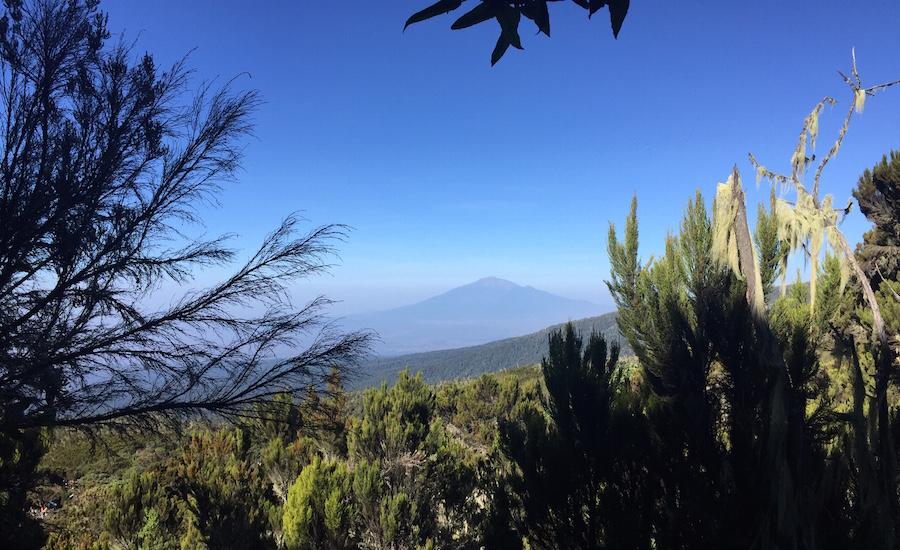 Tanzania Zanzibar safari rejse ngorongoro kilimanjaro natur