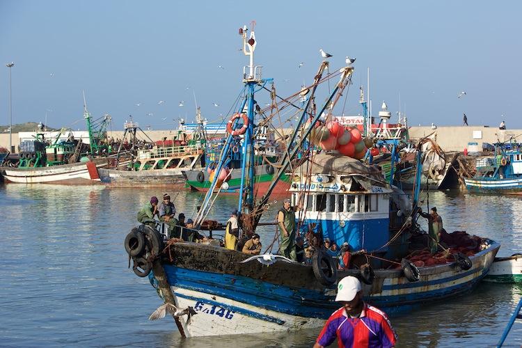 Fiskerbåd tilbage i havnen i Essaouira