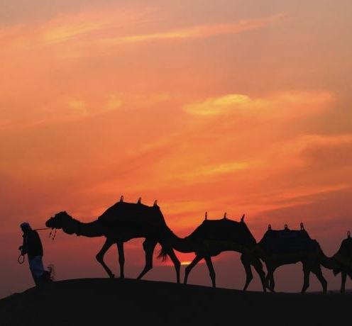 Kontraster i Dubai - Storby og ørken
