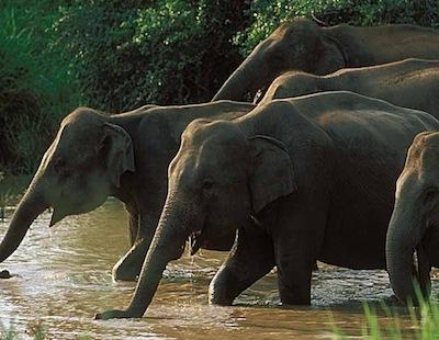 12 dages rundrejse i det syd-vestlige Sri Lanka