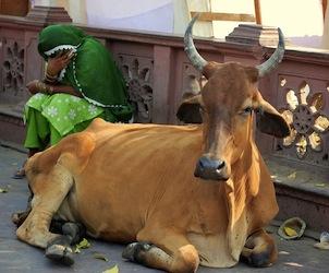 Det bedste af Nordindien