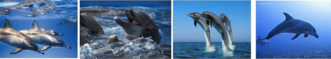 dolphins-house-udflugt-fra-hurghada