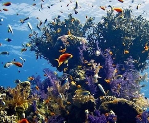 :Priser på Udflugter fra Hurghada