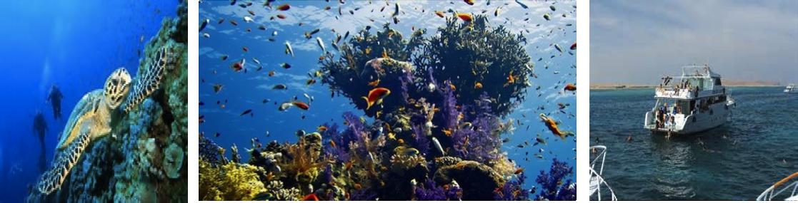 intro-diving-med-flasker-udflugt-fra-hurghada