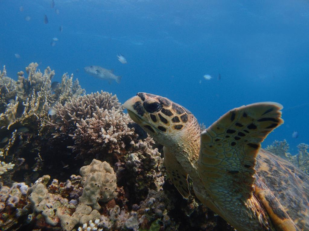 Cleopatra Luxury Resort dykning aktiv badeferie moderne hurghada egypten rejs med younes rejser