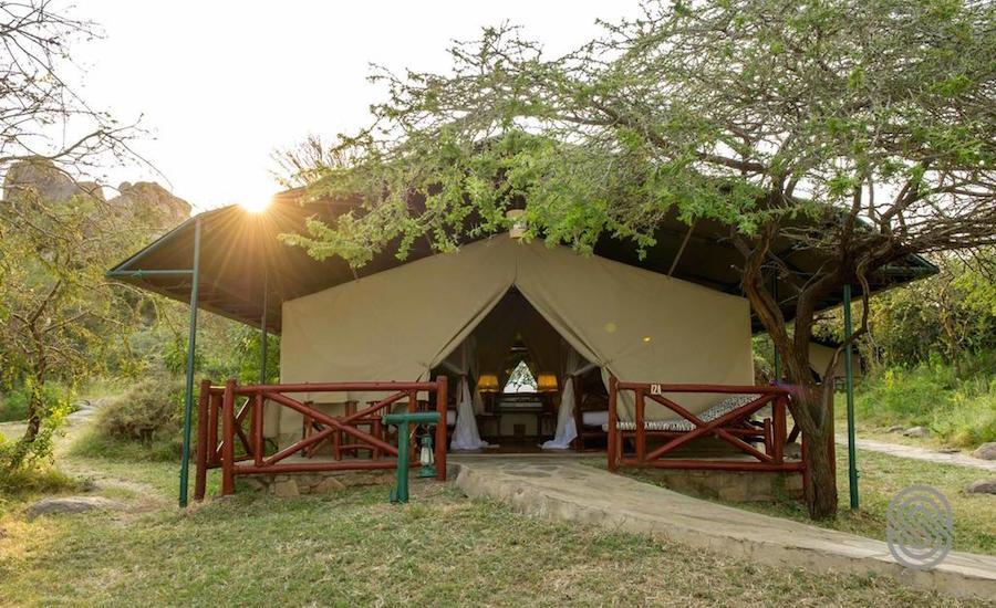 Safari - Mbuzi Mawe Serena Camp - Serengeti