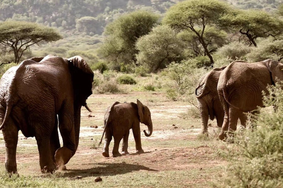 Zanzibar Tanzania safari elephants