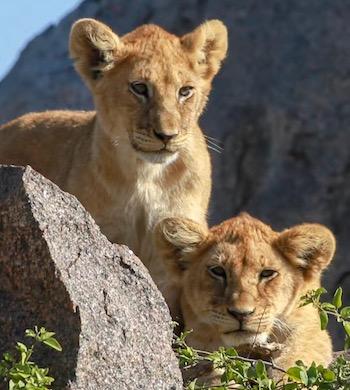 4 dages safari og luksus på Zanzibar