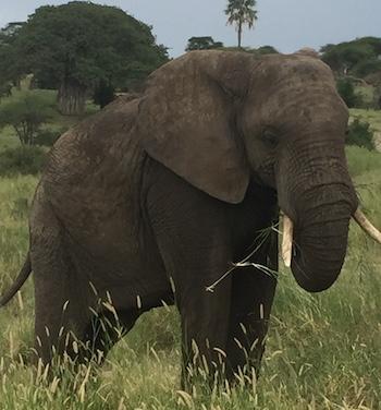 Zanzibar og safari i Tanzania