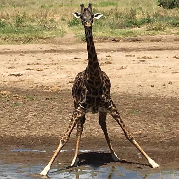 Safari i Tanzania og afslapning på Zanzibar