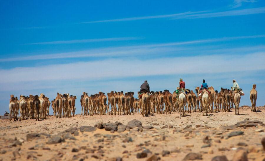 Sudan - camels - Younes Rejser
